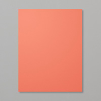 Cardstock in Whisper White, Rich Razzleberry, Pink Pirouette, and Calypso Coral